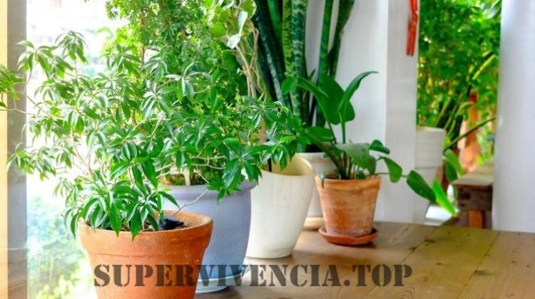9 Plantas de interior fáciles que son beneficiosas para su salud