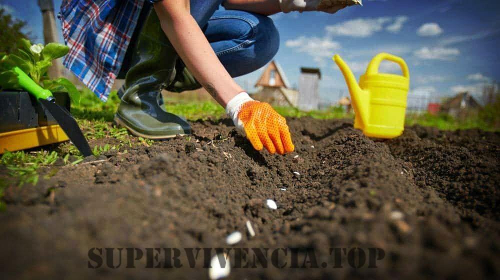 20 plantas de jardinería de supervivencia crecerán esta primavera
