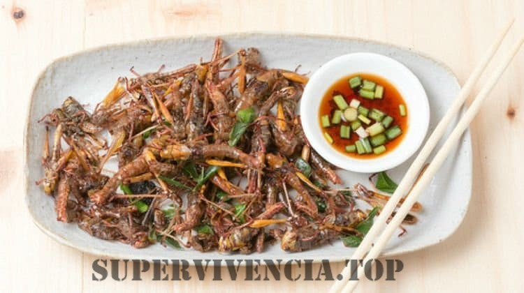 Cómo identificar los insectos comestibles