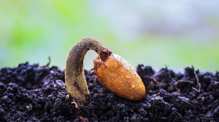 Cómo cultivar plantas de manera efectiva