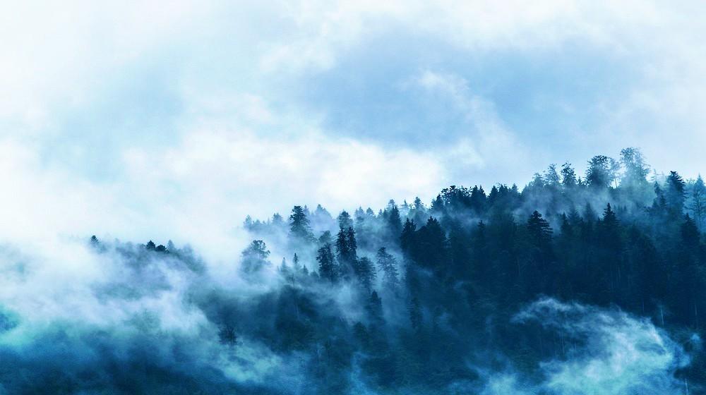 5 Mitos de la supervivencia en la naturaleza que podrían matarte